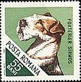 Fox-Terrier-Canis-lupus-familiaris Romania 1965.jpg