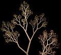 Fraktalträd.jpg