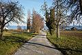 Frasnacht Blick auf Bodensee 2015.jpg
