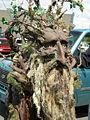 Fremont Fair 2007 pre-parade Ents 09.jpg