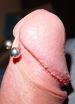 Frenulumpiercing.jpg