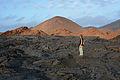 Galápagos Inseln, Ecuador (13895479126).jpg
