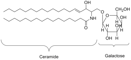 Galactoceramide