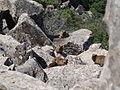 Gamla Nature reserve (15).JPG