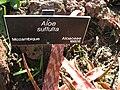 Gardenology-IMG 5375 hunt10mar.jpg
