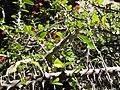 Gardenology.org-IMG 2683 hunt0903.jpg