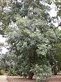 Gardenology.org-IMG 4761 hunt0904.jpg