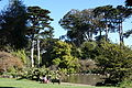 General view - San Francisco Botanical Garden - DSC09895.JPG