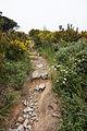 Genoa - trail 3.jpg