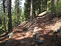Gentle switchback on the beautifully forested trail over the hill between Tiltill Valley and Lake Vernon - panoramio.jpg