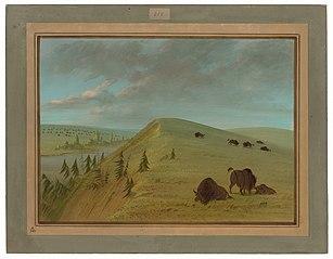 Cedar Bluffs