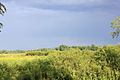 Gfp-wisconsin-richard-bong-state-recreation-area-clouds-over-grassland.jpg