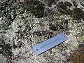 Giardino Botanico Alpino Paradisia abc18.JPG