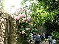 Giardino di Ninfa 4.jpg