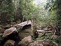 Gibberagong Trail - panoramio (8).jpg