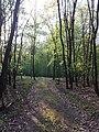 Glasweiner Wald (Schwarzwald) nächst dem Grünen Kreuz sl5.jpg