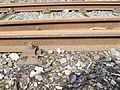 Gleis Bahnhof Ankum.JPG