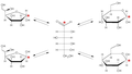Glucidi interconversione forme cicliche.png