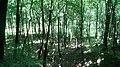 Gmina Wielka Wieś, Poland - panoramio (66).jpg