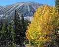 Golden Aspens, Rock Creek Canyon, CA 9-16 (30238924680).jpg