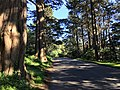Golden Gate Park 2 2016-11-13.jpg
