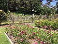 Golden Gate Park Rose Garden 2 2016-06-29.jpg