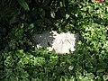 Grave of Ezra Pound 2.jpg