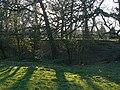 Green grass - geograph.org.uk - 1231607.jpg
