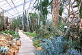 Greenhouse interior - Botanischer Garten, Dresden, Germany - DSC08796.JPG