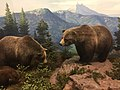 Grizzly Bears, Denver Museum of Nature and Science.jpg