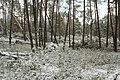 Hövelhof - Moosheide, Sturmschäden - 11.jpg