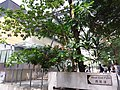 HK Mid-levels 般咸道 Bonham Road September 2018 SSG West End Path.jpg