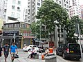 HK Sheung Wan 荷李活道 Hollywood Road Lok Ku Road tree 古今閣 Curios Court shop Aug 2016 DSC.jpg