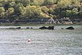 HMS Port Napier wreck 3.jpg