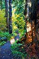 Hackleman Old Growth Trail (Linn County, Oregon scenic images) (linnDA0090a).jpg