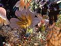 Haifa International Flower Exhibition P1140028.JPG