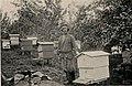 Halutin 1915 beekeeper.jpg
