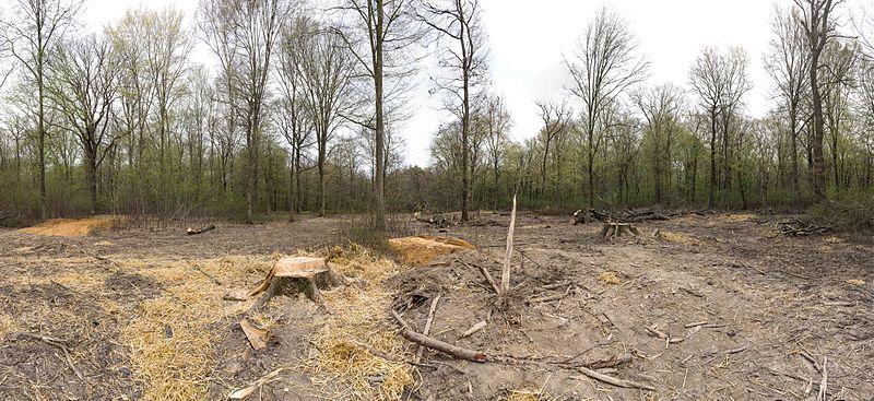 File:Hambacher Forst 30.03.2014 01.jpg