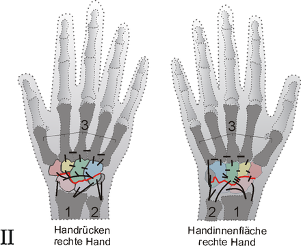 Handgelenk - Wikiwand