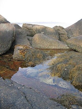 Matinicus Isle, Maine - Harbor tidal pool