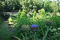 Harris Garden Globe Artichokes.JPG