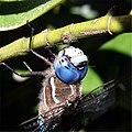 Head of dragonfly.jpg