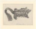 Hepoona roo - 1700-1880 - Print - Iconographia Zoologica - Special Collections University of Amsterdam - UBA01 IZA1000641.tif