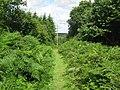 High Weald Landscape Trail in Snipe Wood - geograph.org.uk - 1409138.jpg