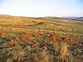 Hill grazing - geograph.org.uk - 297637.jpg