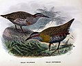 History of the birds of NZ 1st ed p176.jpg