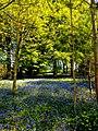 Hodsock Priory, Near Blythe, Notts (21).jpg