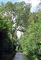Holle weg Gingelom - panoramio.jpg