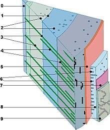 Holz Wikipedia