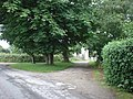 Horse Chestnut trees at the entrance to Ballavarry - geograph.org.uk - 484372.jpg